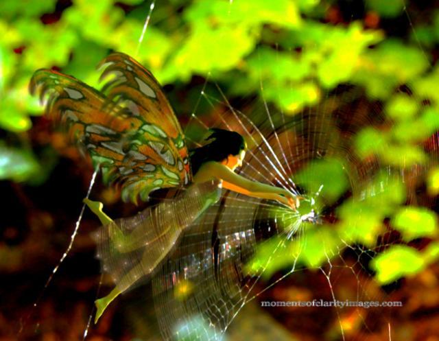 spiderwebfaerieX